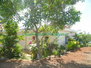 www.real-estate-madagascar.com007-500x375.jpg