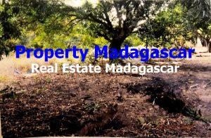 mahajanga-amborovy-land-sale-5.JPG