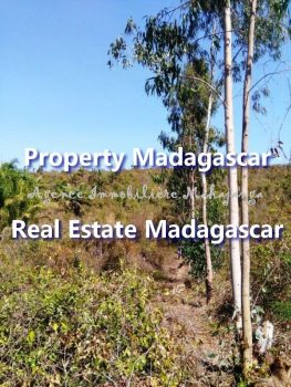 land-for-sale-mahajanga-ampazony-3.jpg