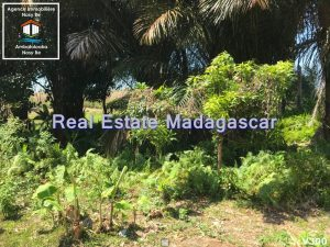 land-for-sale-district-belaza-3.jpg