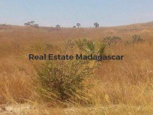 sale-agricultural-land-mahajanga-2.jpg