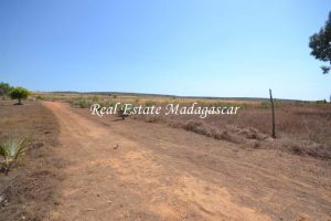 sale-land-fifteen-hectares-mahajanga-3.jpg