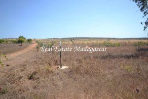 sale-land-fifteen-hectares-mahajanga-4.jpg
