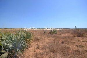 sale-land-fifteen-hectares-mahajanga-5.jpg