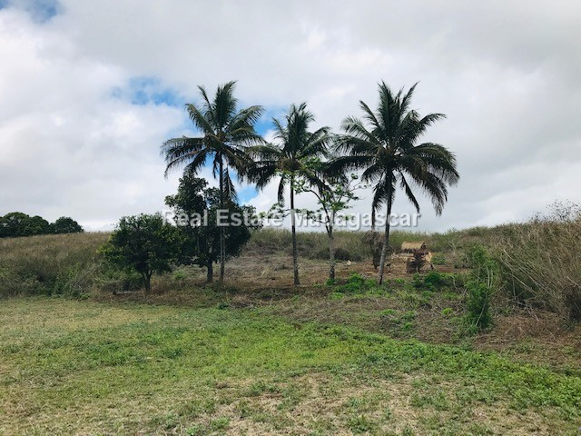 agriculture-sale-land-72-hectares-1.jpg