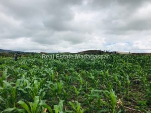 agriculture-sale-land-72-hectares-2.jpg