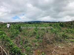 agriculture-sale-land-72-hectares-3.jpg