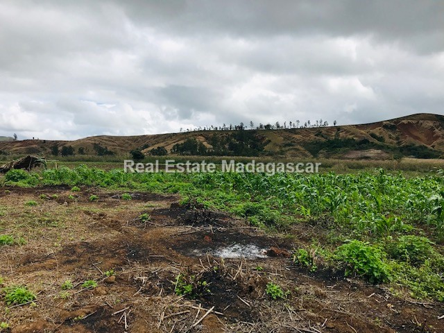 agriculture-sale-land-72-hectares-4.jpg