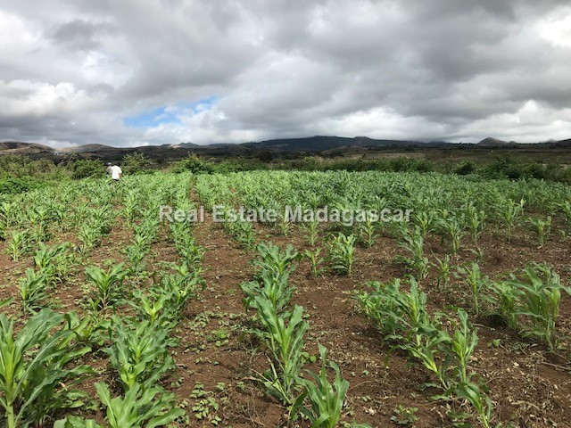 agriculture-sale-land-72-hectares-5.jpg