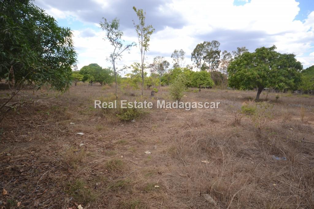 amborovy-land-sale-mahajanga-21.jpg